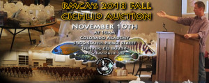 AuctionFALL2018