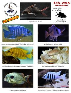 2016 February-Mini-Auction-Fish